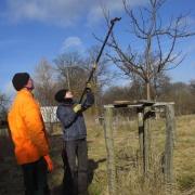 Obstbaumschnitt 2012