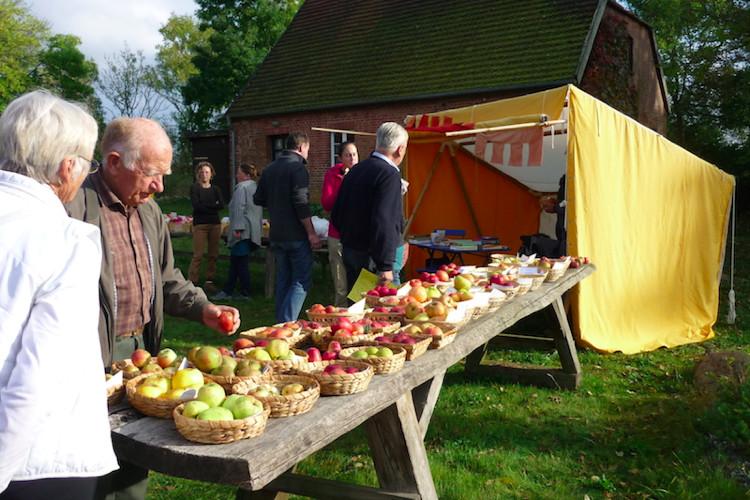 Große Sortenschau beim Apfelfreundefest 2014