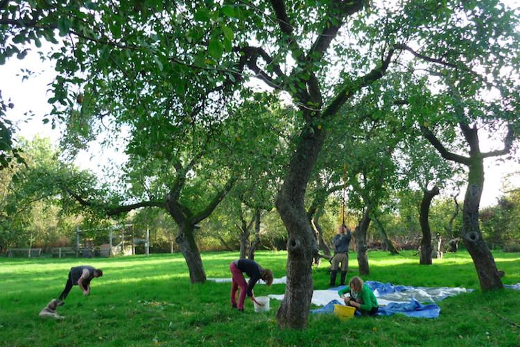 Äpfelsammeln vor dem Apfelfreundefest 2014