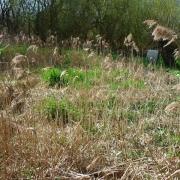 pflanzenklaeranlage1