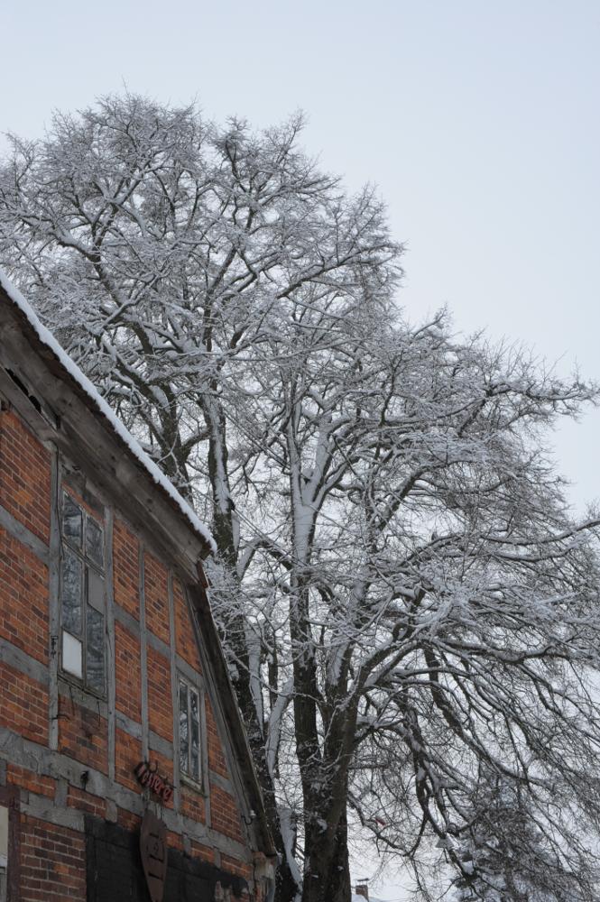 161109_winterschlafdermosterei